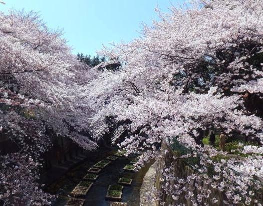 itabashi-syakujii