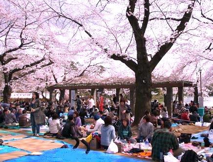 senzokuike-sakurakouen